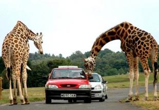 8-west-midland-safari-park-22516