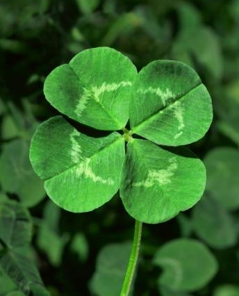 st-patricks-day-clover-images-2015
